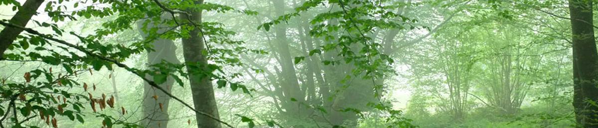 Permalien vers:Projet Patrimoine Naturel